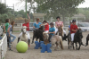 http://www.centre-equestre-salonais.com/wp-content/themes/humble/timthumb.php?q=100&w=650&h=350&src=http://www.centre-equestre-salonais.com/wp-content/uploads/2016/03/PoneyFoot.jpg