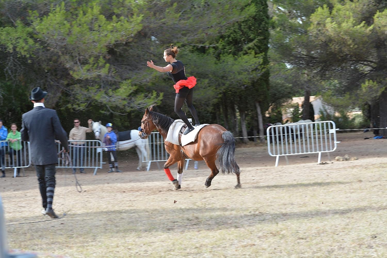 f te du cheval 2016 centre equestre salonais