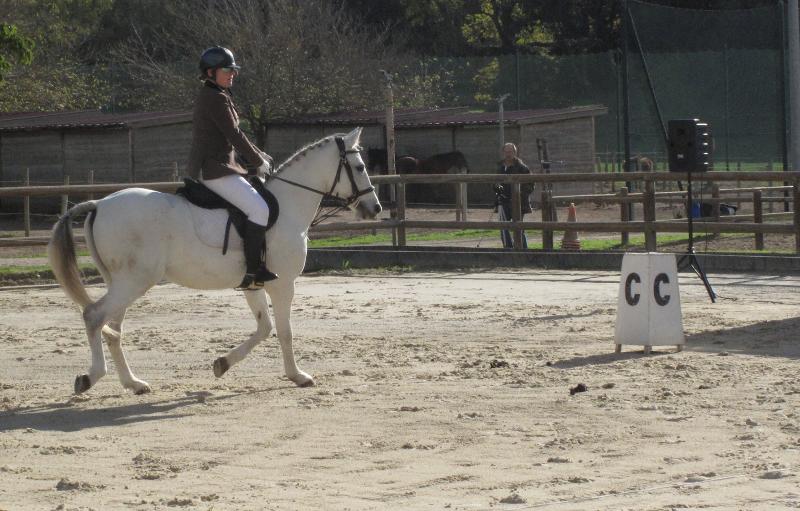 comp titions de dressage centre equestre salonais